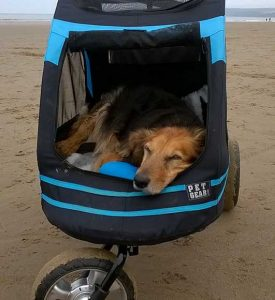 We love Ben's doggy buggy!